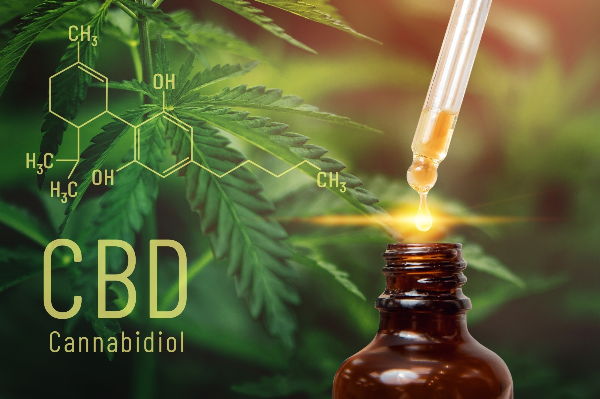 Everything You Need to Know About Starting a CBD Business